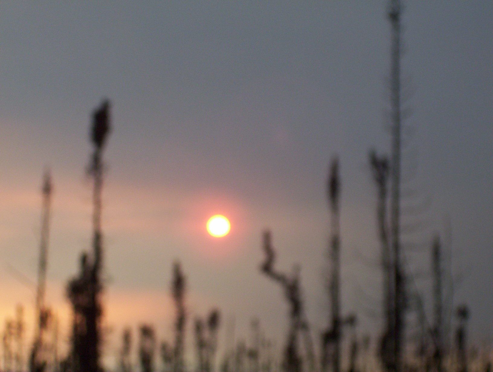 Sun thru forest fire smoke Alaska